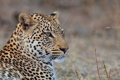 c4 images and safaris, isak pretorius, mashatu, photographic workshop, photography