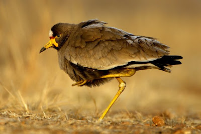 bird photography, landcape photography, photo workshops, photographic safari