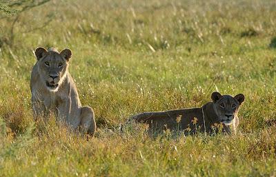 c4 images and safaris, chiefs island, photo workshop