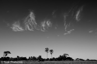 chiefs island, workshop, wildlife photography,  okavango delta, isak pretorius,
