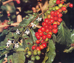 Ethiopia the birthplace of Coffee