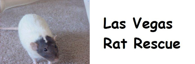 Las Vegas Rat Rescue