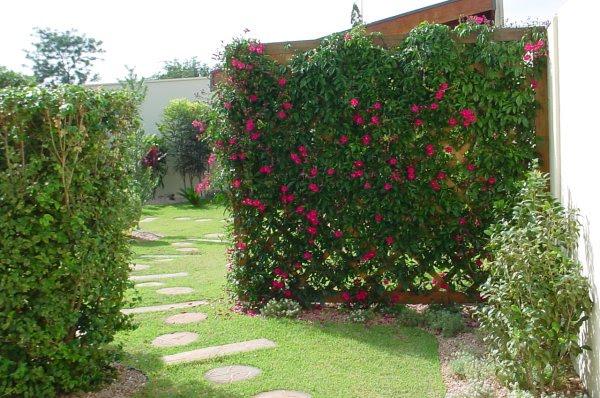 plantas de jardins tipos : plantas de jardins tipos:JARDINS MARAVILHOSOS.: subindo no muro, nas paredes