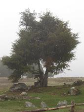 Outras árvores ...