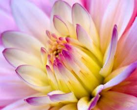 É primavera...o amor está no ar!