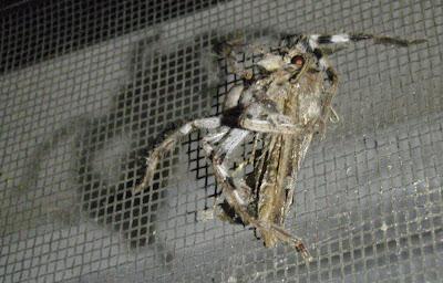 close flame burnt result moth voters eaten passing spider socialism
