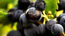 Montepulciano d&#39;Abruzzo Grapes