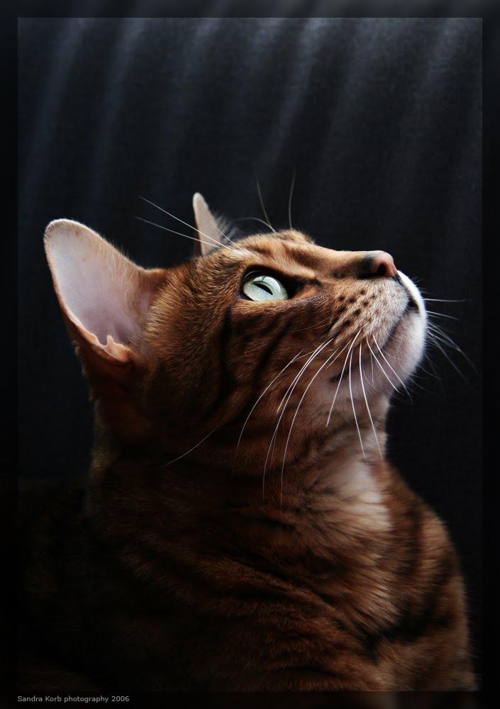 cute cat poses