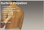 Survace Palpation