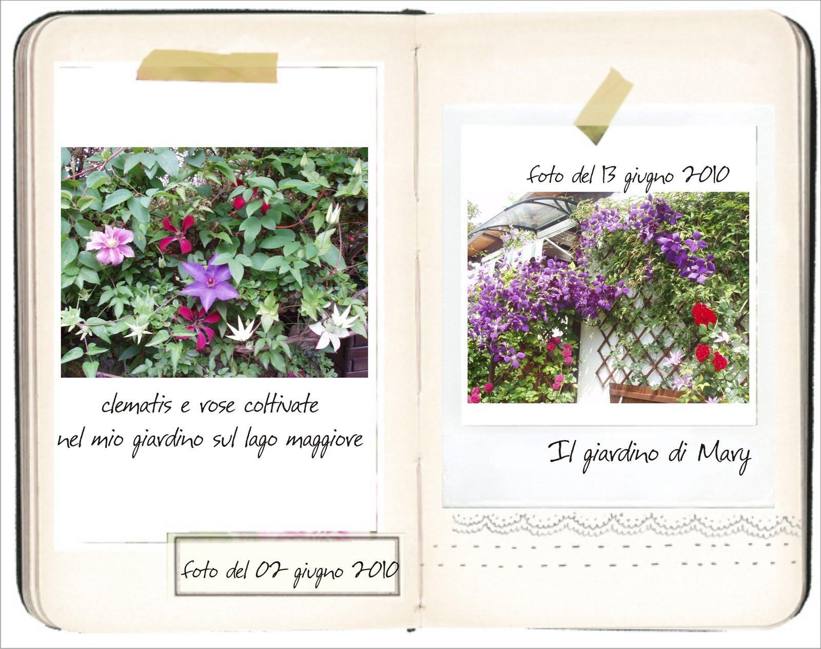 Diario del tuo giardino le clematis di mariangela - Crea il tuo giardino ...