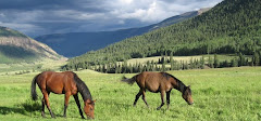 High Mountain Horses... at home on our ranch.