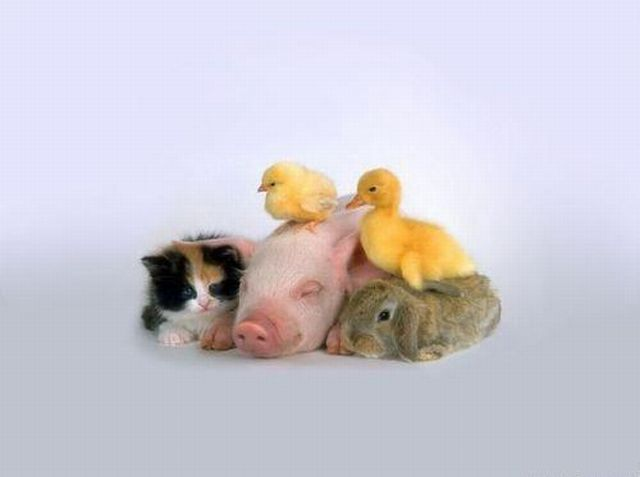 Funny Animals Seen On www.coolpicturegallery.us