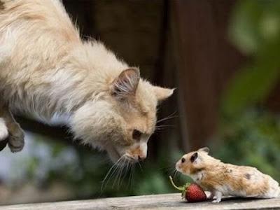 Legenda permusuhan kucing dan tikus