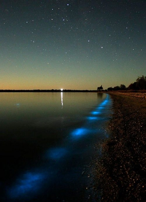 Amazing Bioluminescent Lake in Australia Seen On www.coolpicturegallery.us