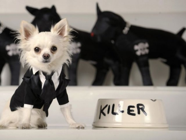 Funniest Dogs Wearing Costume Looking So Cute In These Pictures Seen On www.coolpicturegallery.us