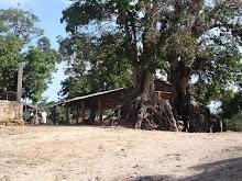 Haïti : Erosion des sols dans la chaîne montagneuse des Cahos