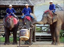 elefantes tocadores