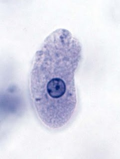 Bacterias de la Amibiasis