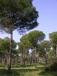 cuidemos los bosques!!!