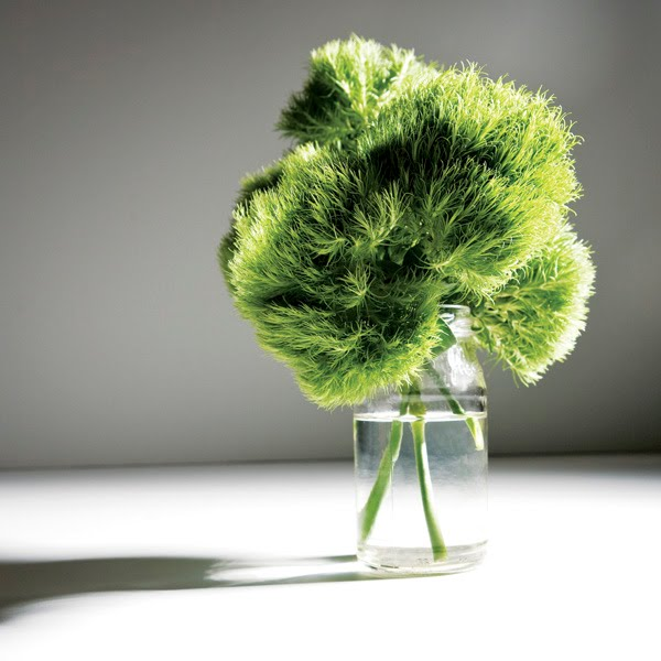 Numero Magazine Blog: Le Rage Item #1: Green Trick Flower