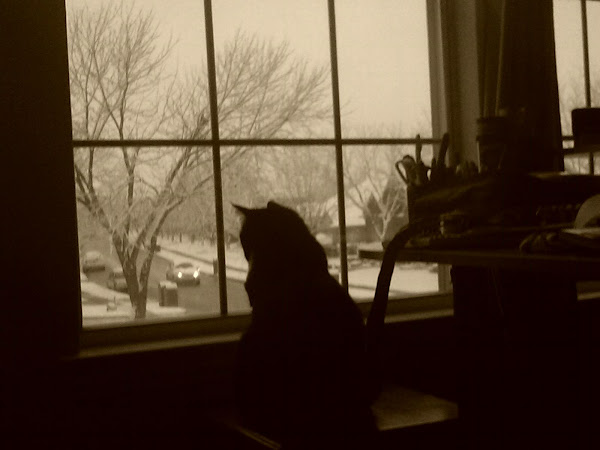 Jeannie the cat... not too sure about all that white stuff out there...