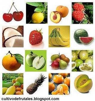 Cultivo de frutales elecci n de los rboles frutales - Cuando se plantan los arboles frutales ...