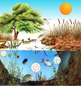 mural pintura ecologica: