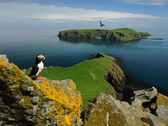 Puffin, Shiant Islands