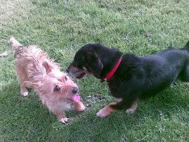 Pepe e la piccola Sissi