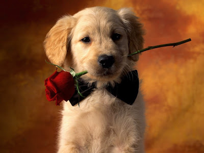 Dogs Valentine S Pictures