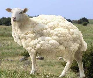 Koyun sütünün faydaları nelerdir.