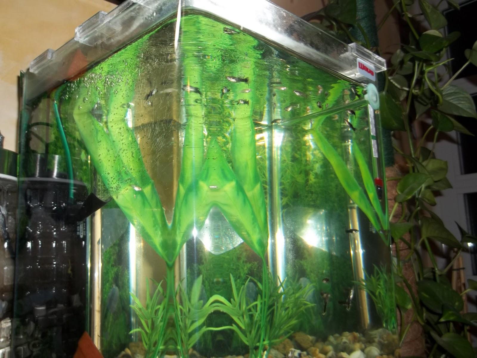 Pesci ornamentali per acquario vendita pesci ornamentali for Acquario vendita