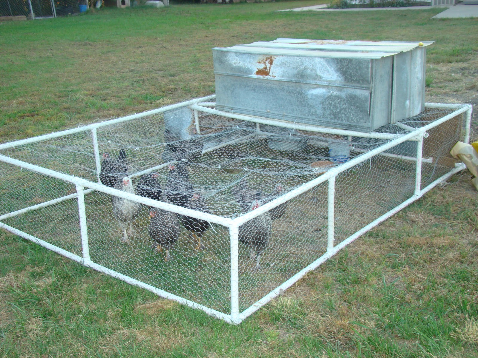 Yam coop january 2014 for Chicken coop made from pvc