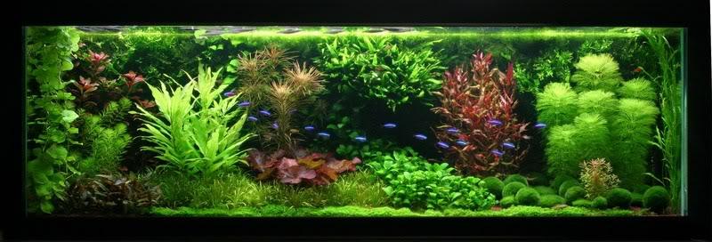 acuario holandés es un tipo especial de acuario que tiene su origen