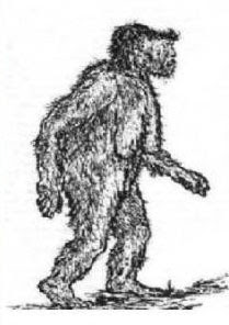 Patterson+Bigfoot+Drawing.jpg