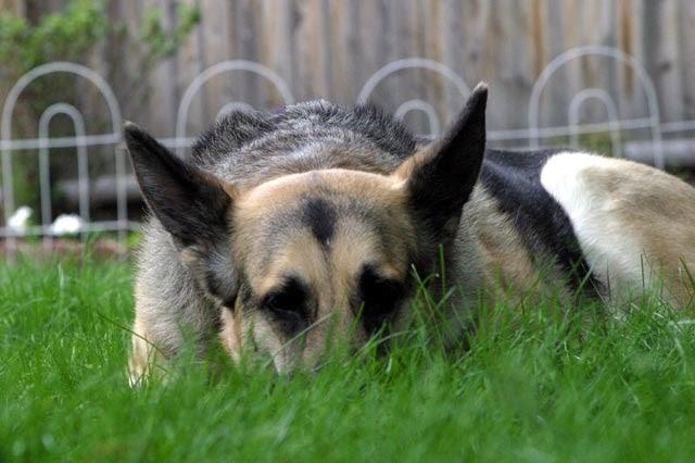 El Encantador de Perros | Adiestramiento perros y consejos