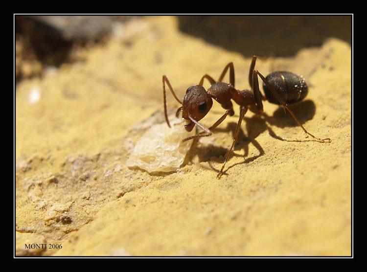 Eliminando plagas con remedios naturales hormigas - Remedios caseros para eliminar hormigas en casa ...
