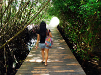the entrance of mangrove forest