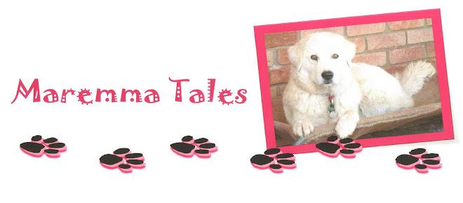 Maremma Dog Tales