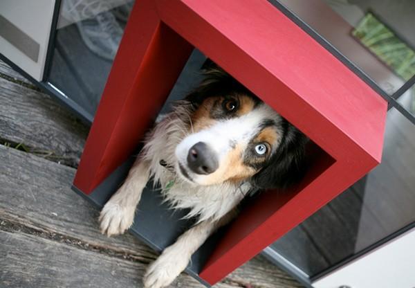 Cubix Modern Dog House Sale