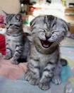 """""""Rir de tudo é coisa dos tontos, mas não rir de nada é típico dos estúpidos."""""""