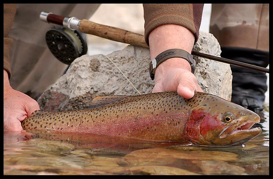 Chuck robbins outdoors beaverhead trout report for Beaverhead fishing report
