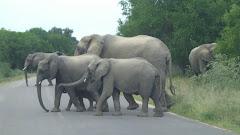Kruger Park in S.A.