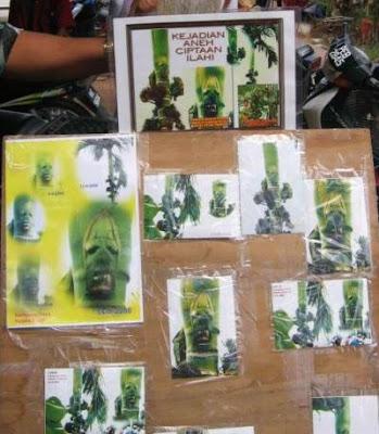 馬來西亞樹妖 人臉的樹節