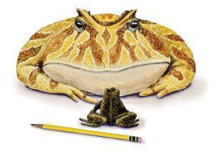 史前魔鬼蛙