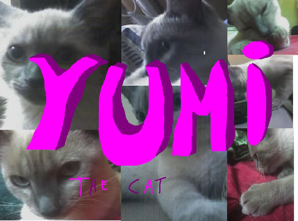 Yumi The Cat