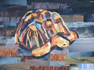 Turtle by collage artist Megan Coyle