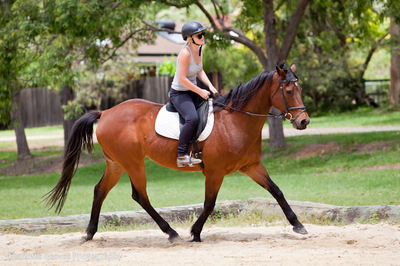 Posture, Seat, Balance: Improve your horse riding ...