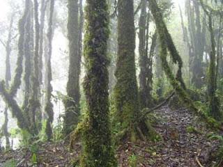 Bioma hutan tropis yang termasuk dalam bioma hutan hujan tropis