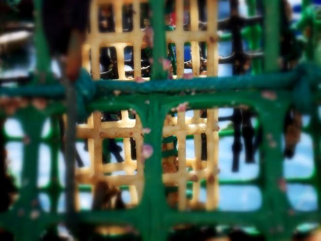 serotonin nest